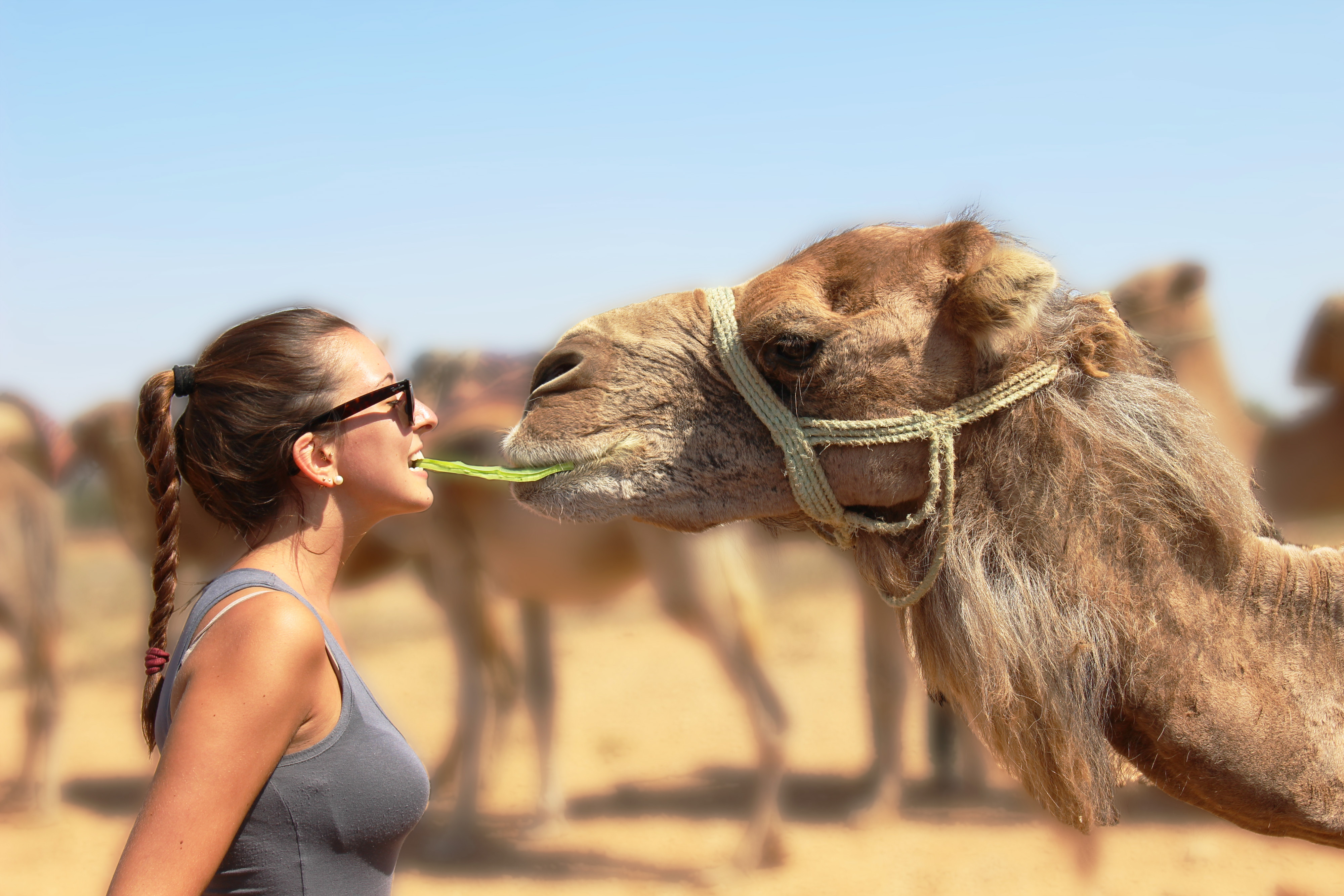ragazza-cammello2